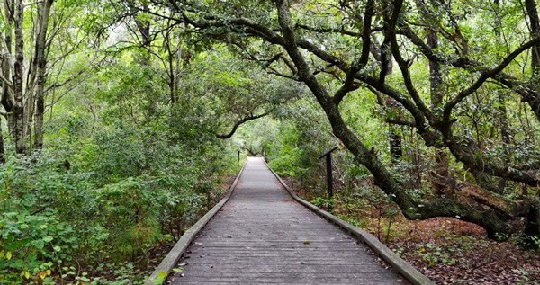 Currituck-Boardwalk