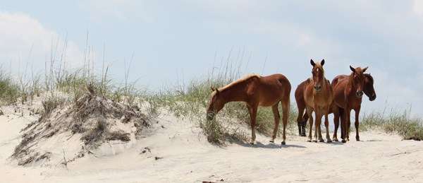Wild Horses Corolla Self Tour