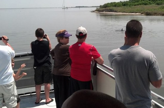 Outer Banks Cruises - People watching dolphins